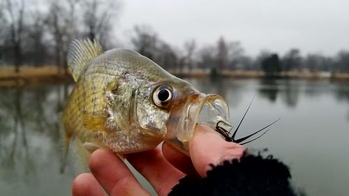 White Crappie | by Isaac's Fishing Corner