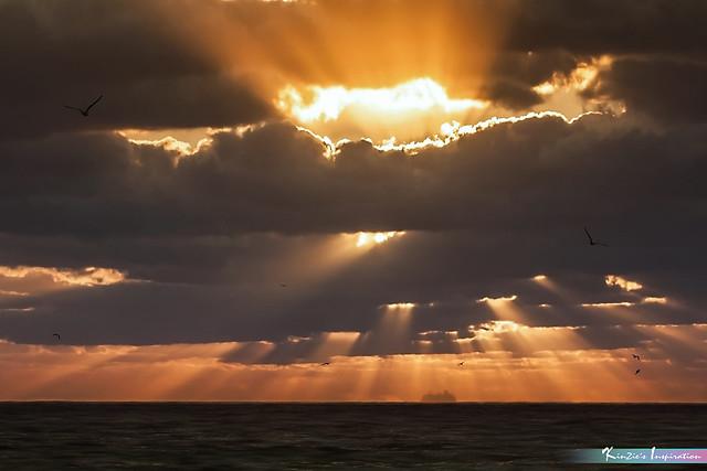 Can't Stop Shining *A Beautiful Nature*