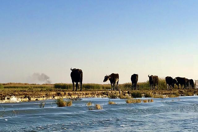 2018 Iraq Tigris swamp area IMG_3427