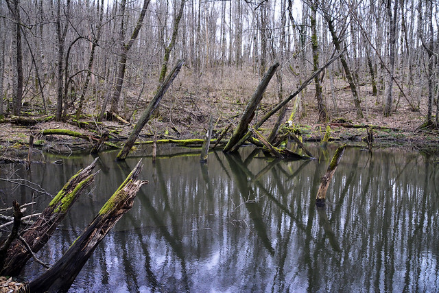 Monastic gap. Lake in the forest, formed on the site of a landslide.