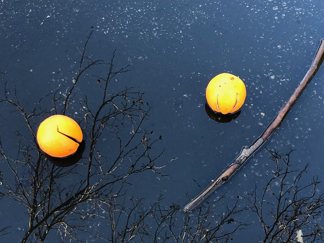 Still Life of Cast-off Oranges in A Puddle