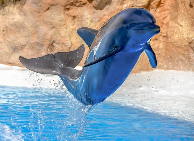 Freundlicher Delphin (Flipper?)