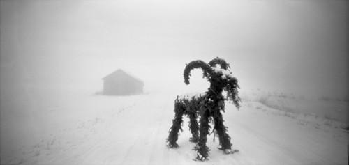 bock foggy fog winter snow plain yulegoat 6x12 nolens nordic pinhole