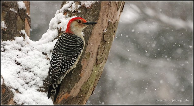 Snowbird brun dating