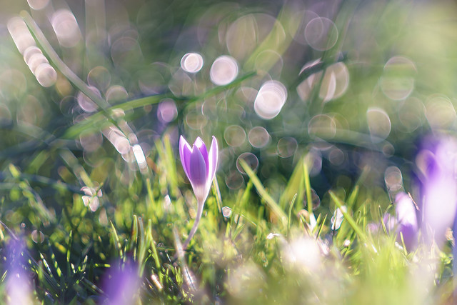 Spring bubbles...
