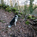 Border collie during walkie walkie