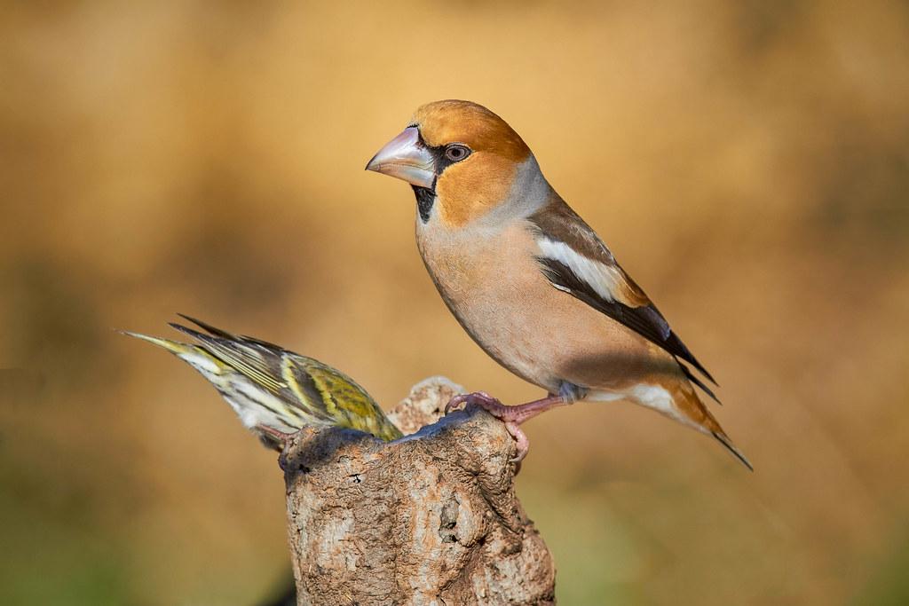 Aves-clasificación-de-los-animales-ovíparos