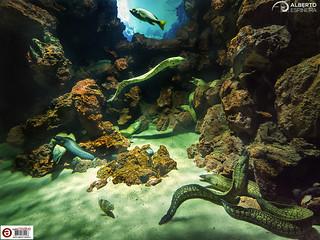 Life and rocks (Poema del Mar)   by Alesfra