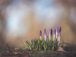 Harbinger of spring | by A_Peach