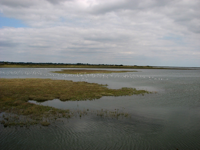 Hamford Water National Nature Reserver