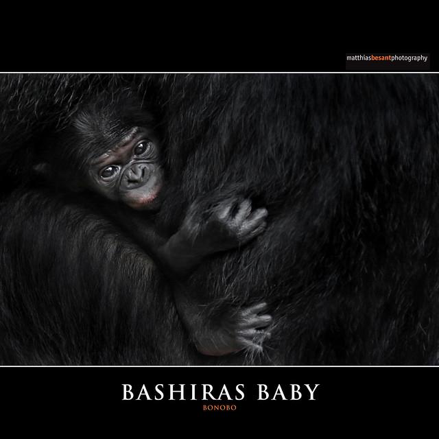BASHIRAS BABY