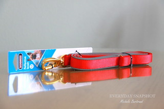 Dogness Leash (2) | by Everyday Snapshot