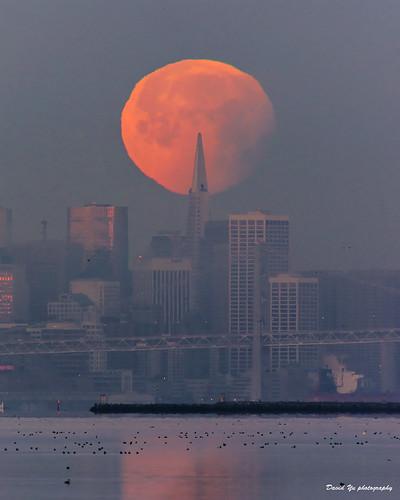 supermoon blue moon sanfrancisco transamerica luckysnapshot sfist