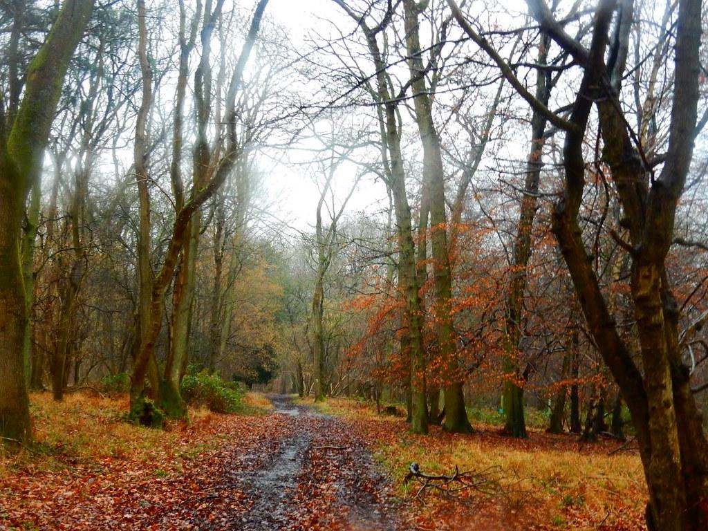 Great Wood Henley Circular via Hambleden