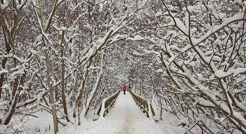 winter finland winterwonderland winterfairytale nature