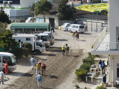 船橋競馬場から引き上げる馬たち