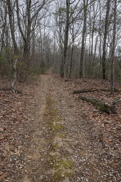 Cumberland Trail, Brady Mountain Segment, Cumberland County, Tennessee