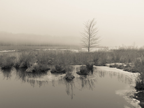 tree water lake pond shore reflections winter sullivancounty landscape blackandwhite