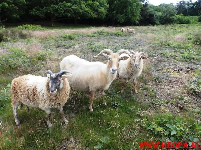 2015-06-27 F.K.C. 't Gooi Wandeltocht 36.4 km (49)