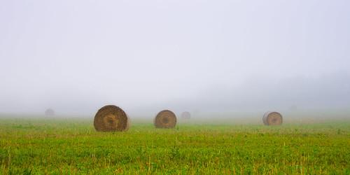 morning green field fog hay bales bale