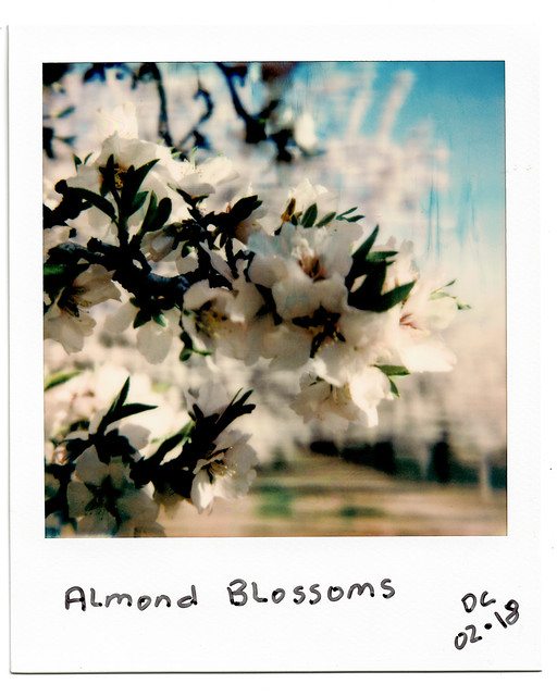 07•52 • 2018 • Almond Blossoms