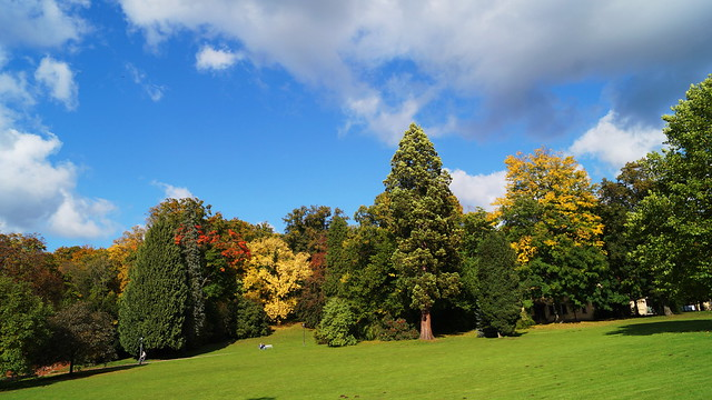 Altenstein - Schloss & Park: Riesen-Mammutbaum / Castle & Park: Giant Redwood