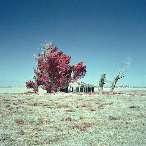 eyetwistkevinballuff eyetwist abandoned vacant farmhouse tumbleweeds mojavedesert california film analog colorinfrared mamiya 6mf 75mm color infrared ir cir cir120 russian ishootfilm mamiya6mf mamiya75mmf35l colorinfraredcir analogue mamiya6 square 6x6 120 filmexif iconla epsonv750pro lenstagger mediumformat bw 022 yellow yellow022 filter magenta blue mojave desert highdesert landscape derelict homestead ranch house empty broken windows bleak barren dry drought dust apocalypse grapesofwrath steinbeck joads american west rural decay desolate lonely farm trees americantypologies antelopevalley