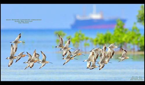 EAAF007 Olango Island Wildlife Sanctuary
