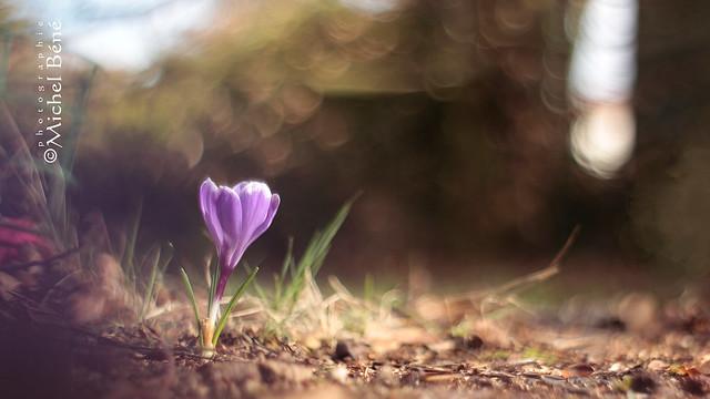 le printemps n'est pas loin