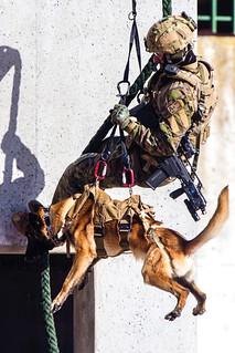 El Mando de Operaciones Especiales #MOE cuenta ya con una incipiente capacidad #cinológica | by Ejército de Tierra
