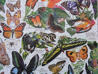 White Mountain Puzzles 1000 World's Most Beautiful Butterflies | by Olcia Ola