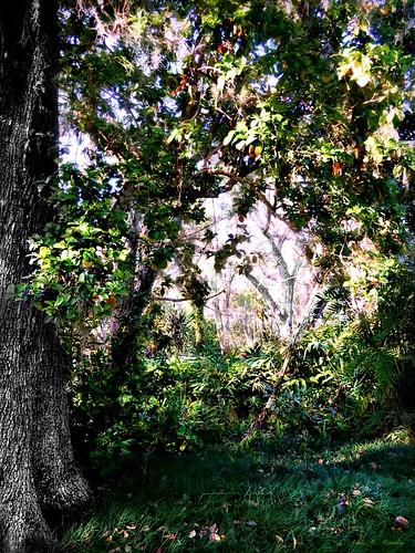 anothersugarmillportal sugarmillgardens portorangeflorida scenic nature outdoors park garden portal trees