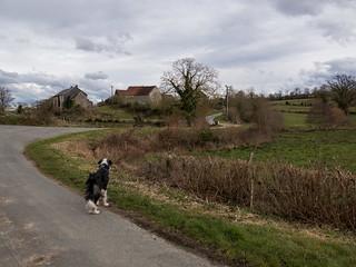 Walking the dogIMG_9517.jpg | by Elise de Korte