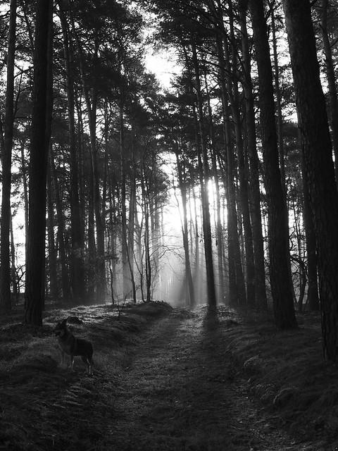 Brzoza woods, Poland
