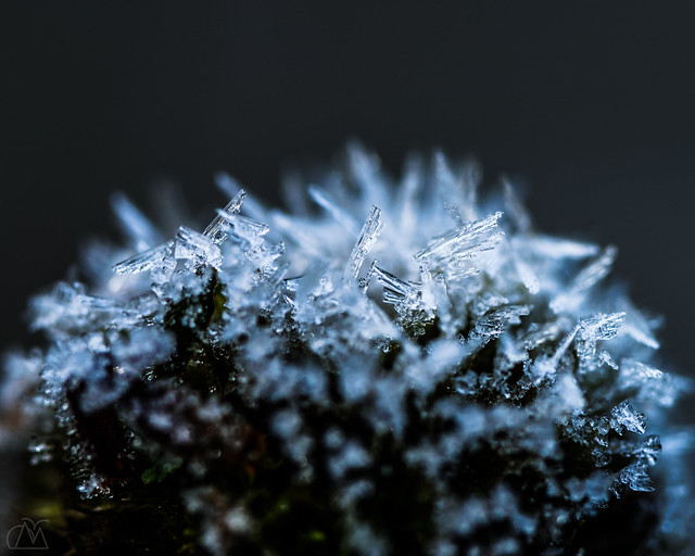 Frosted Blossom