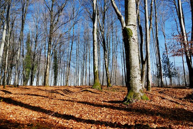 Promenons-nous, dans les bois, ….