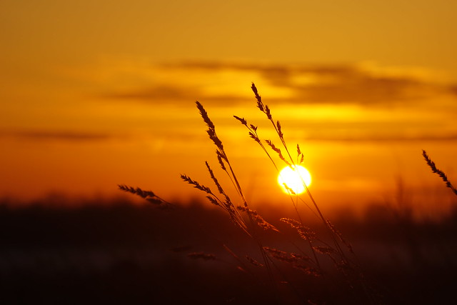 Sunrise. Field.