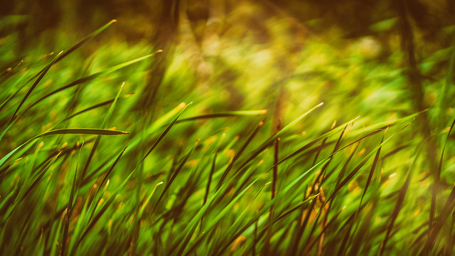 Sunlight on grasses