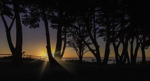 stleonards geelong bellarinepeninsula sunrise trees sunburst road silhouette capturingthecoast