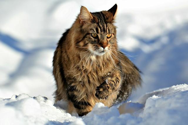winter Elvis