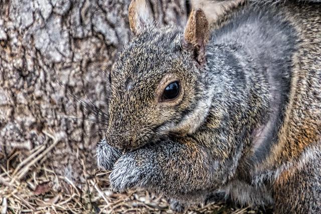 Same Squirrel, Different View