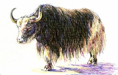 Yak-Postcards for the Lunch Bag