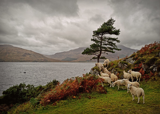 Counting Sheep...