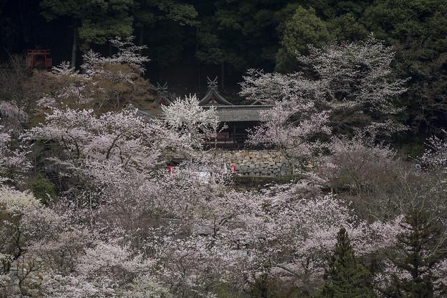 Hase-dera 長谷寺