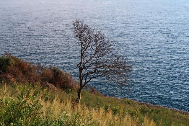 Seaside nature