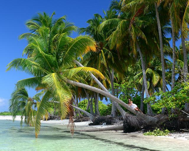 Palmera paradisíaca en Maldivas