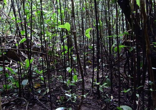 Thu, 08/05/2010 - 15:05 - Nonggang Forest Dynamics Plot