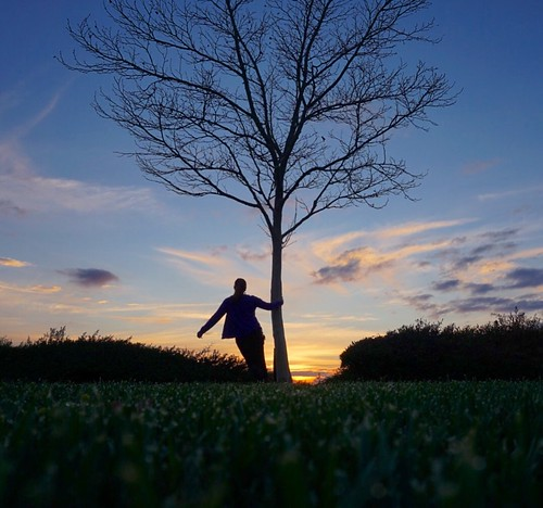 100views treesilhouette tree treehugger sunday march silhouette colorful hillcrestpark park grass 10secondtimer timer sonya6000 sony sunset nature day70 365days