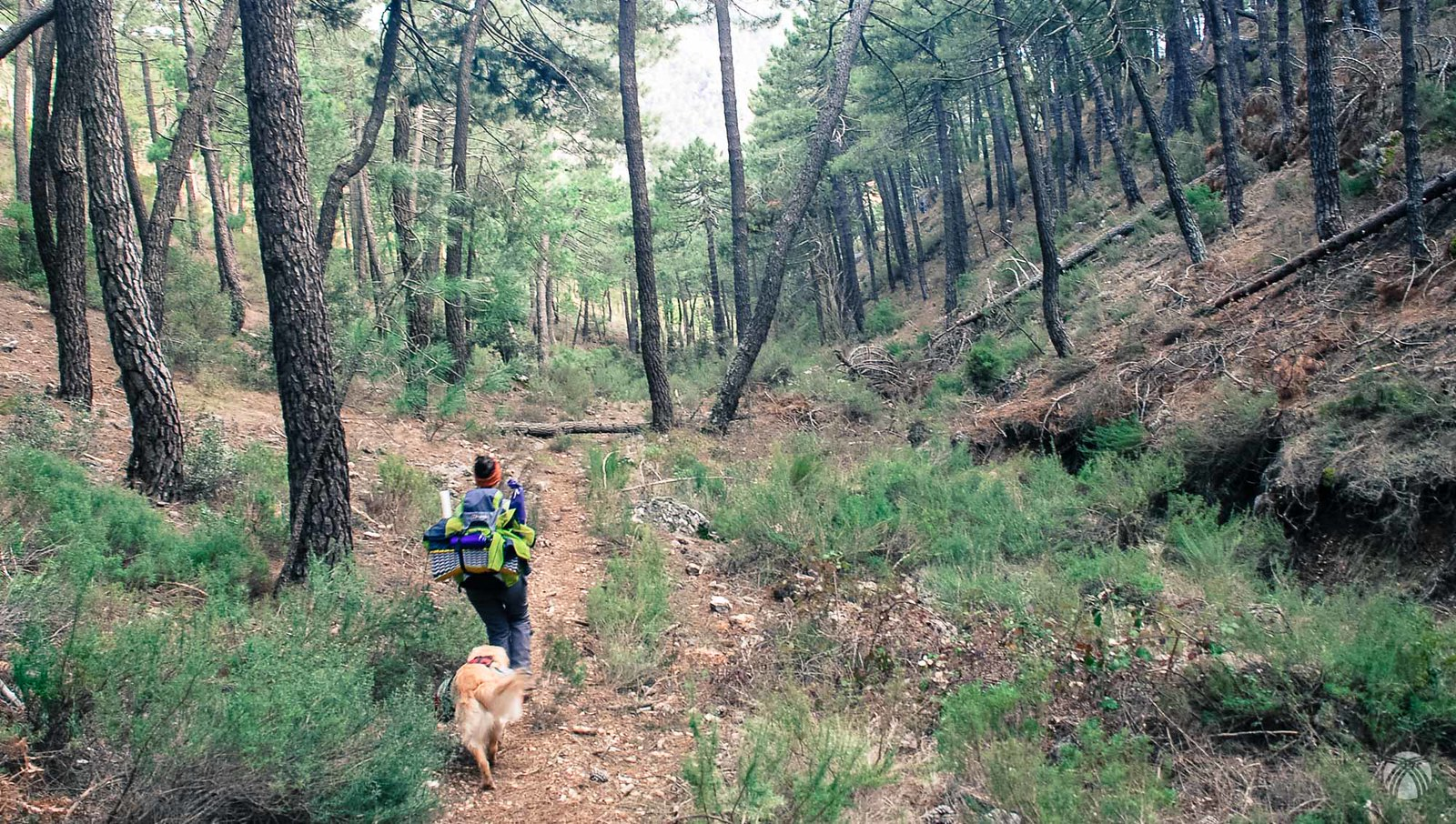 Siguiendo el GR66 en el paraje de Fuente Grande