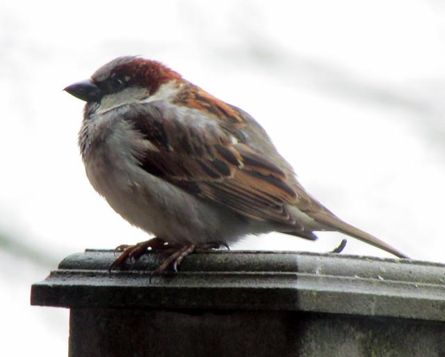 65/365 Mean Little Bird